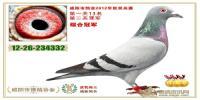 2012年秋300/500公里双关综合冠军