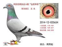 2014秋500公里双关鸽王五名