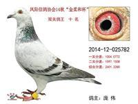 2014秋500公里双关鸽王十名