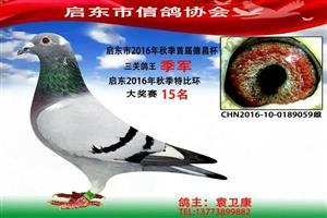 启东2016年各赛事冠军风采