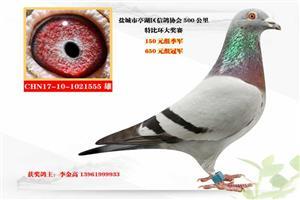 2017年秋季获奖鸽照片