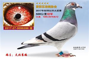 2017秋赛.奖鸽欣赏