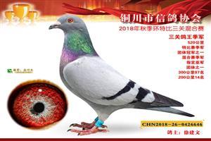 2018年秋获奖鸽