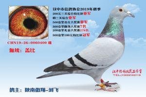 200特2陕南傲翔-刘飞
