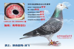 200特3陕南傲翔-刘飞