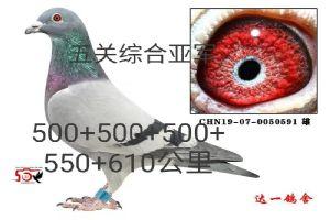 微信图片_20200229131932