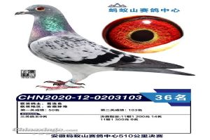 2020-12-0203103