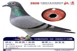 兴城市信鸽协会